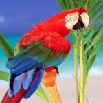 The Parrot Next Door